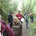 Forage for food in the woods