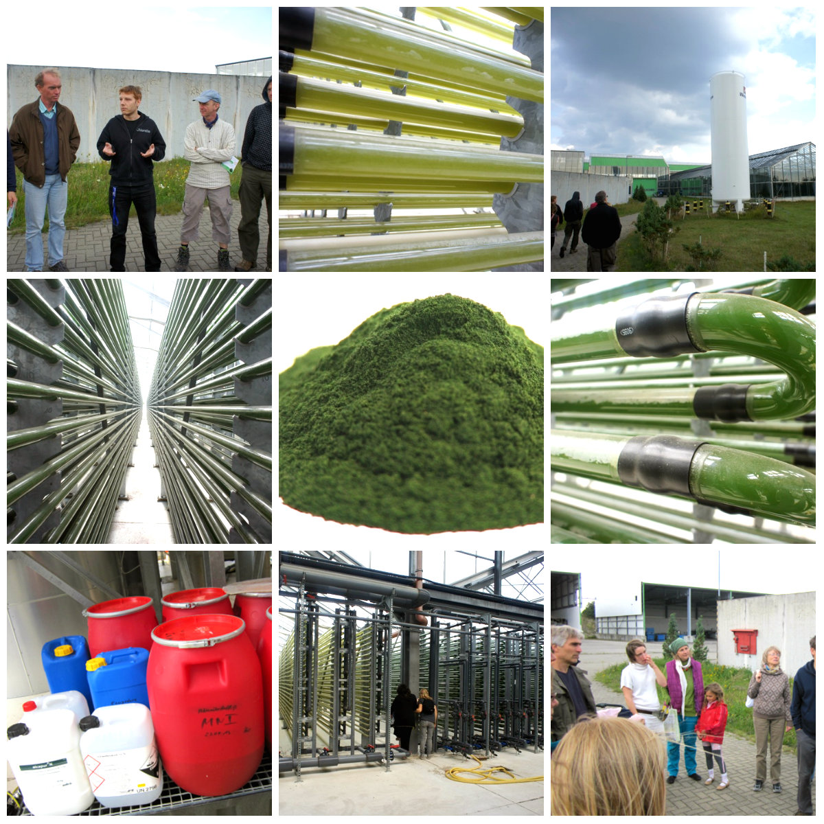 chlorella factory