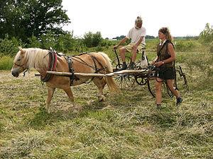 sl paarden2